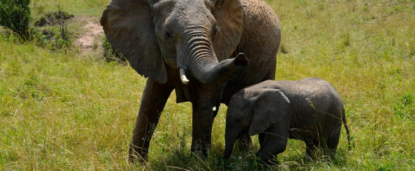 Elephant with her baby in the African bush
